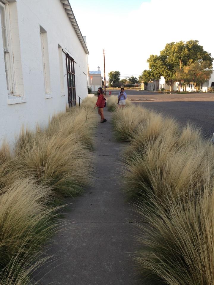 Marfa Grass 3 - Maleeha Sambur.jpg