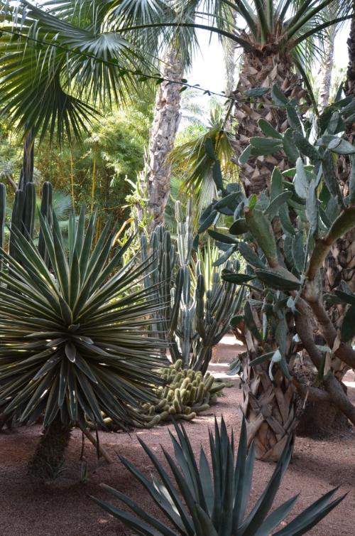 Jardin Majorelle cactus garden | photo by Maleeha Sambur