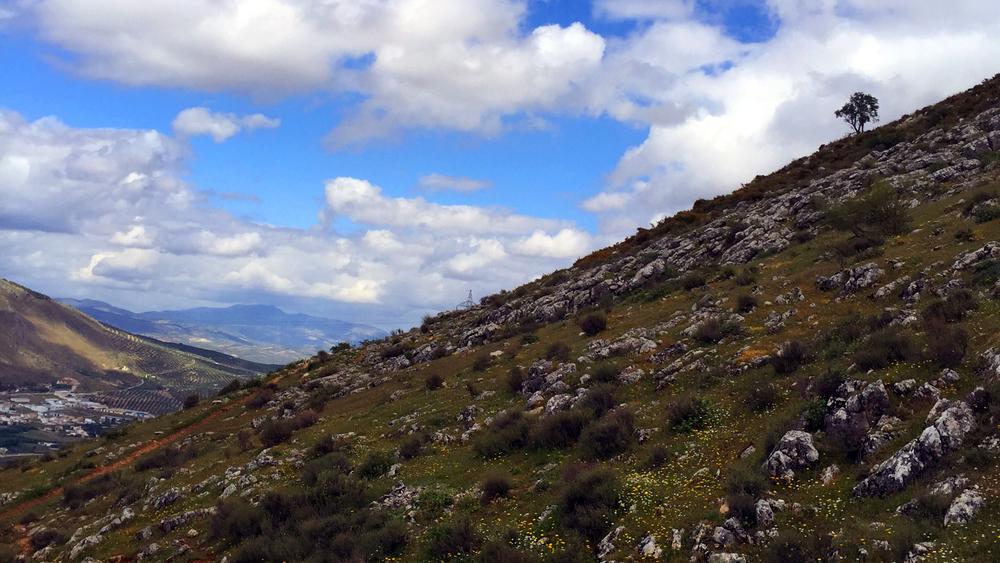 Spain tree valley.jpg