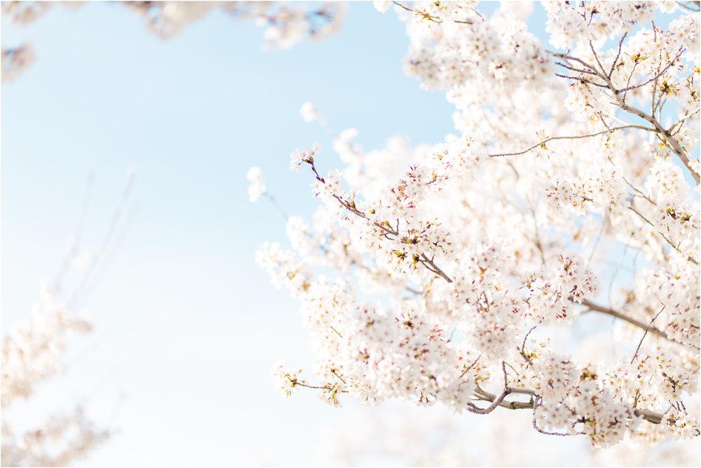 Blossoms at the Utah Capital