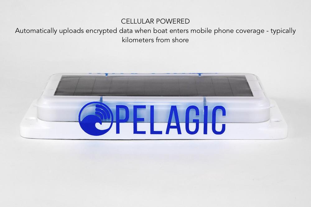 Pelagic02 copy.jpg