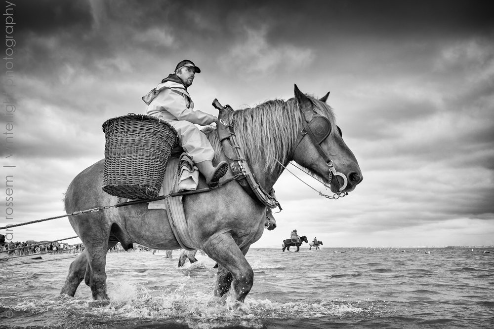 Shrimp Fishing on Horseback - Garnaalvissers Te Paard 1