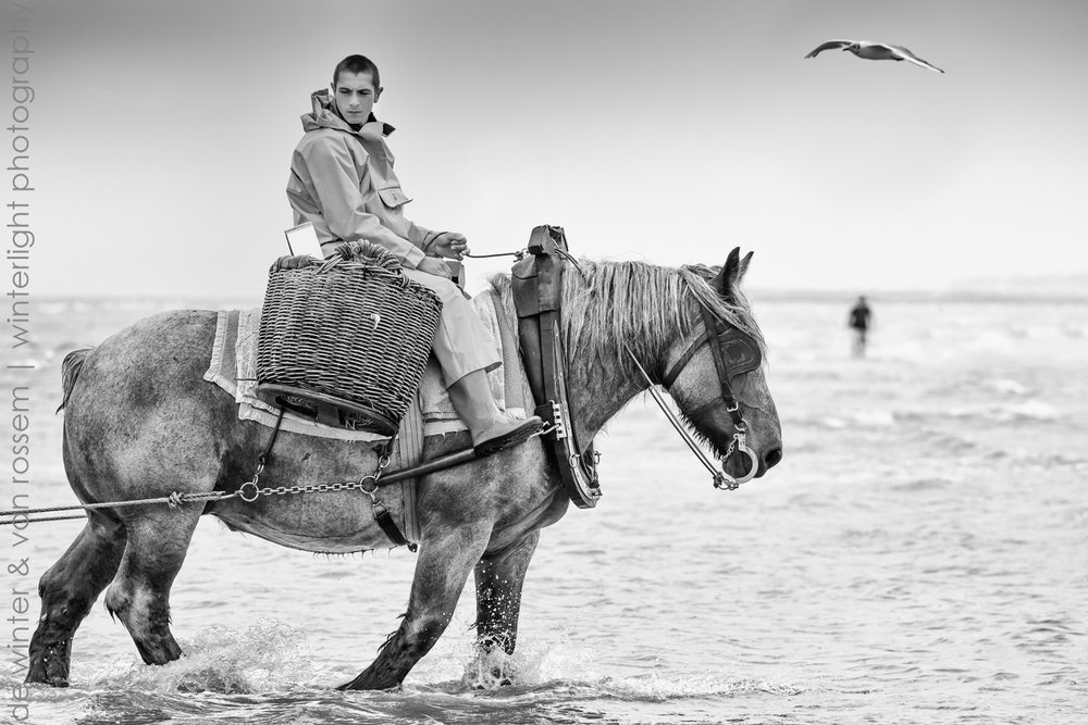 Shrimp Fishing on Horseback - Garnaalvissers Te Paard 4