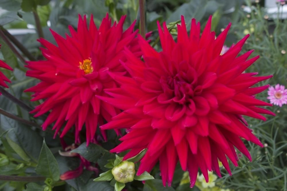 Seth Coan Flowers1.jpg