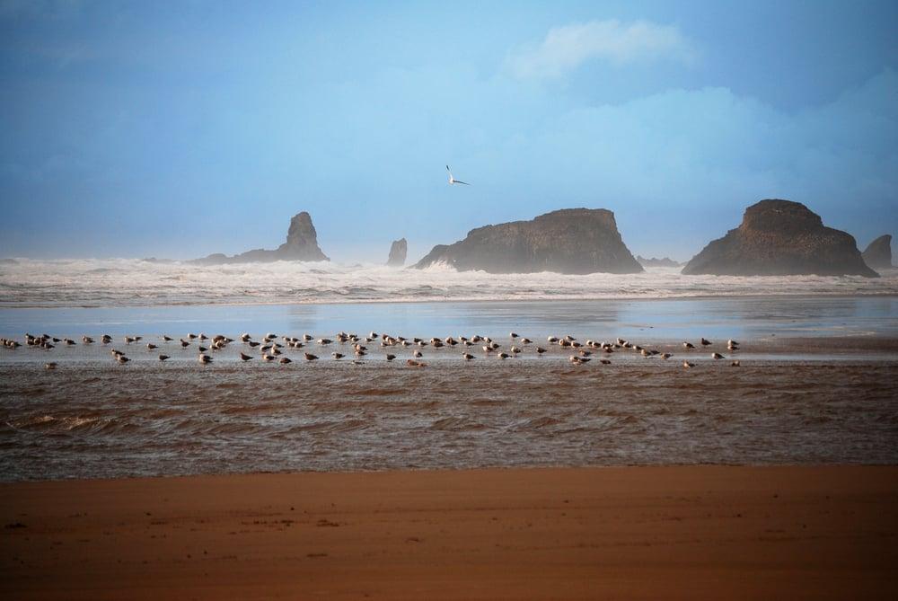 Misty Coast.jpg