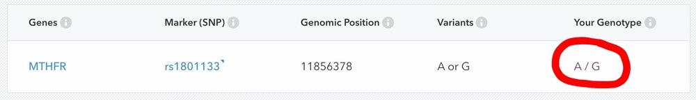 23andme MTHFR gene