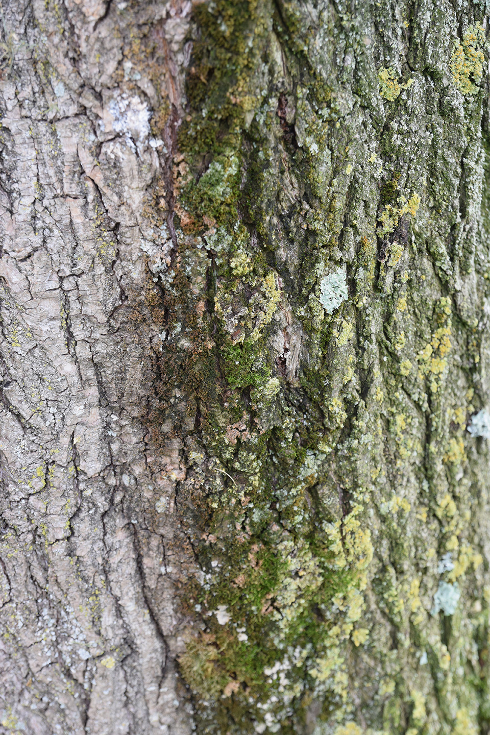 Willow tree bark dipped in green, Sausalito CA