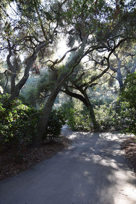 Oak forest of Descano Gardens, La Canada Flintridge, CA