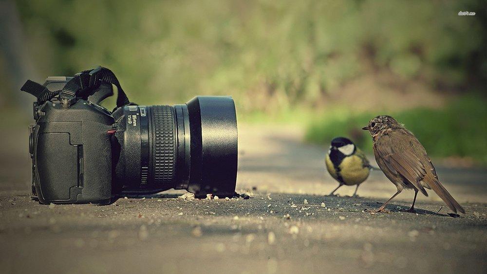 photography 2.jpg