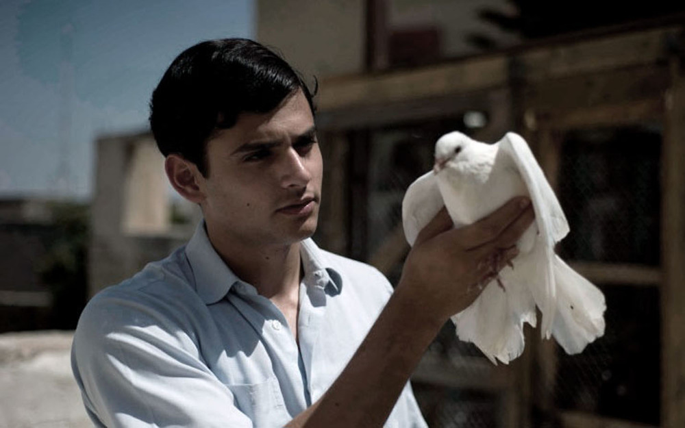 The Dove Flyer_5_b.jpg