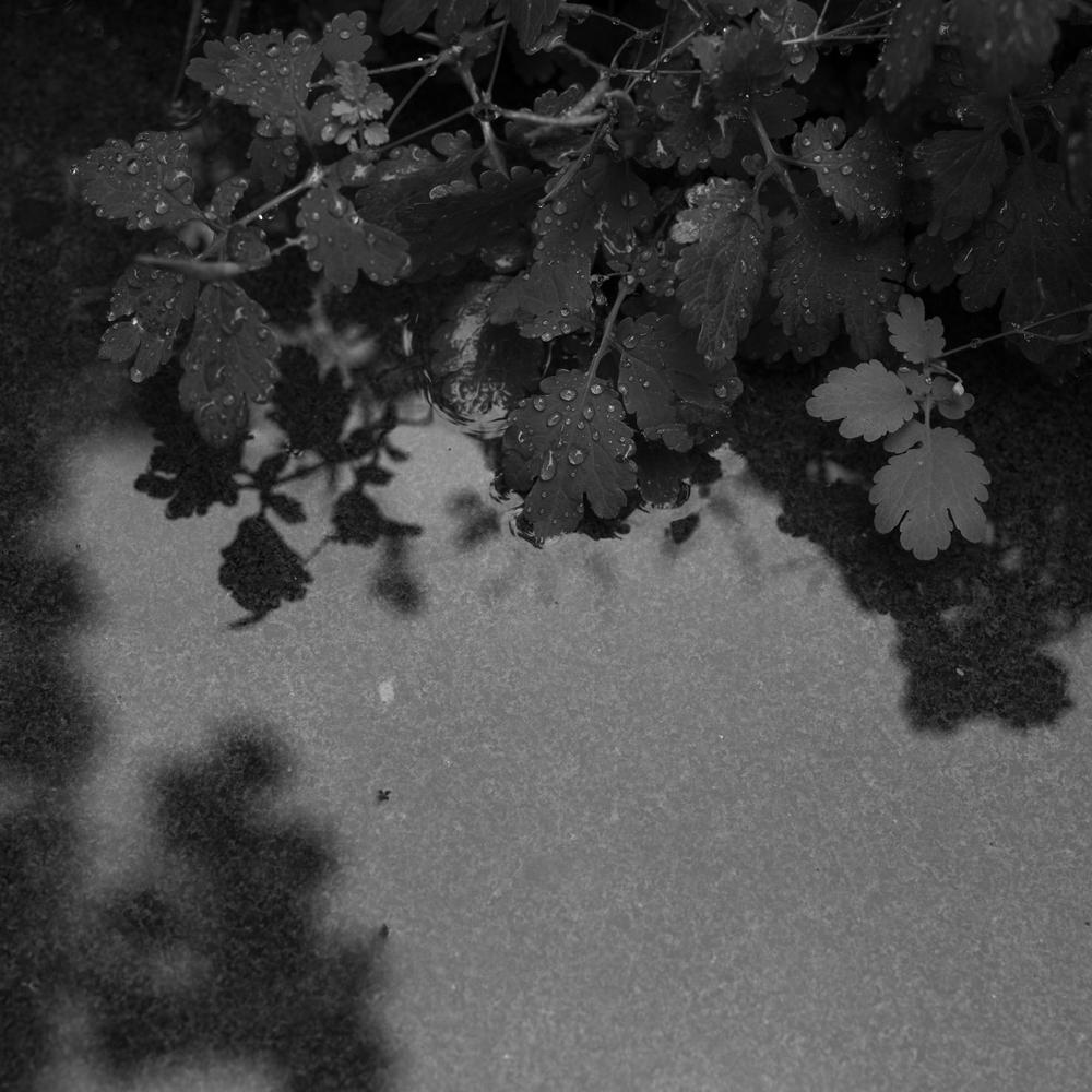 rainylnd_4.jpg