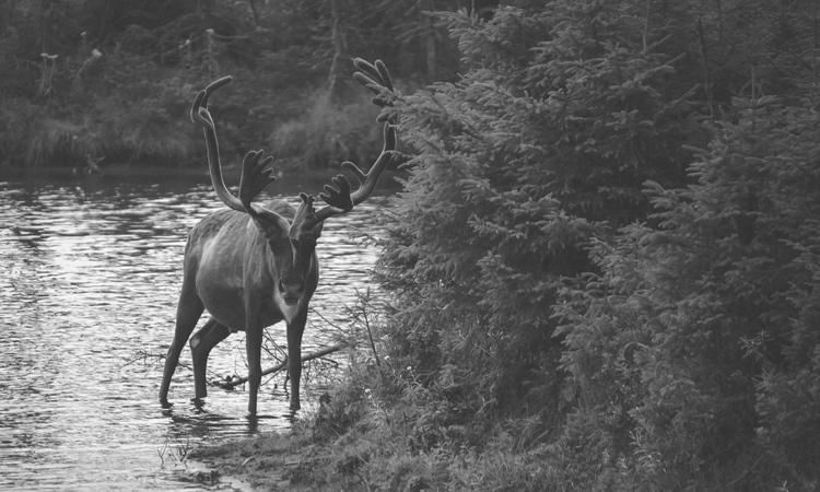 Elk 1.jpeg