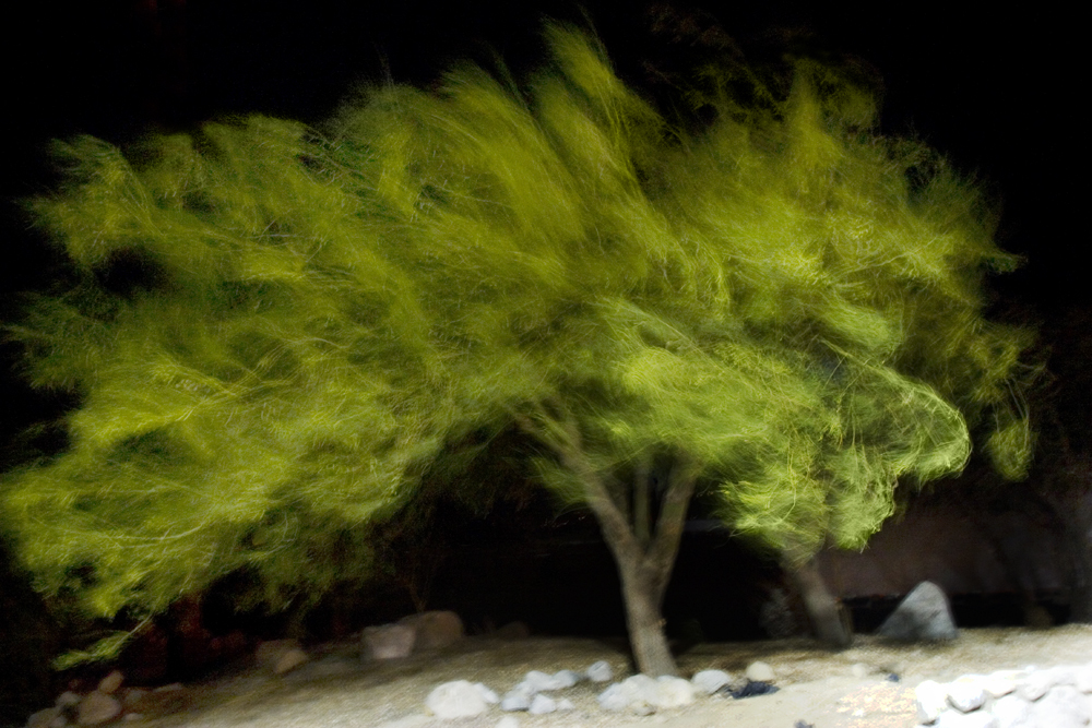 Windy Tree.jpg