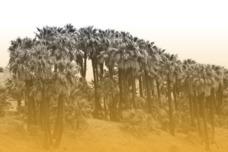 Tori+Colour+Landscape+1.jpg