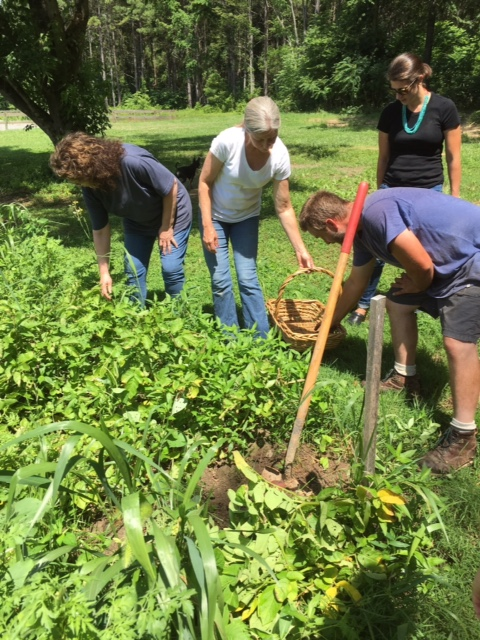 Harvesting vegetables for lunch and the mindful cooking class