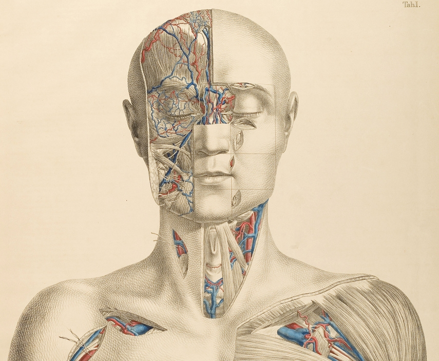 Why Everyone Should Take an Anatomy Class — Meredith Gulley
