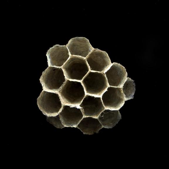 wasp nest.jpg