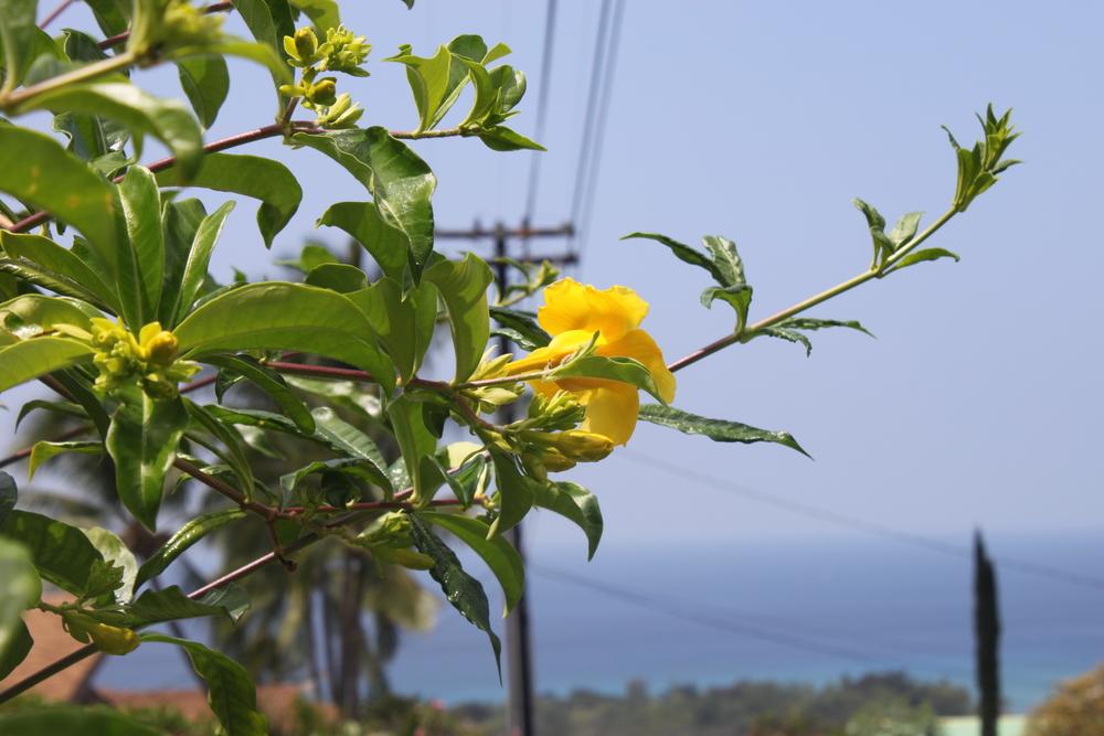 hawaii-2011-168.jpg