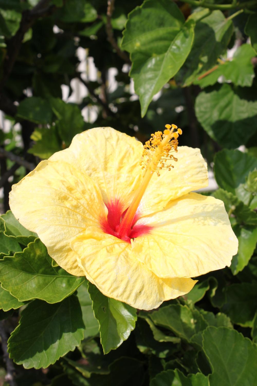 hawaii-2011-169.jpg