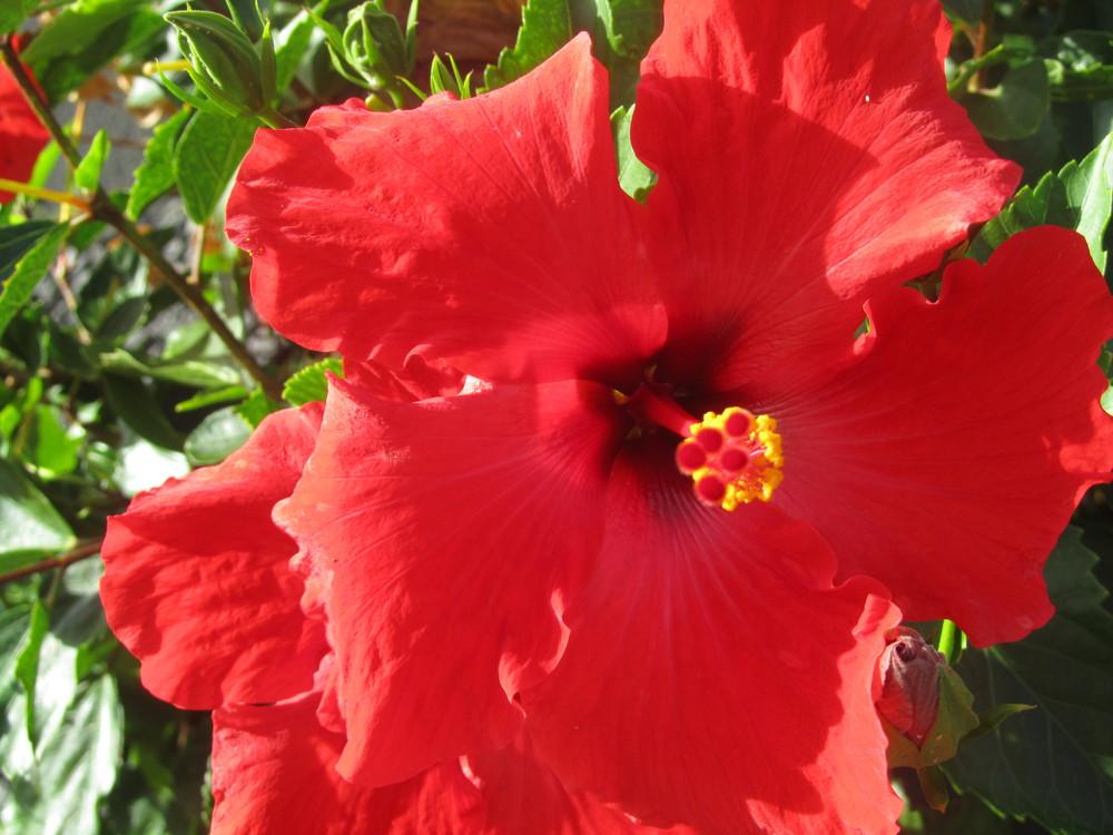 hawaii-2011-122.jpg