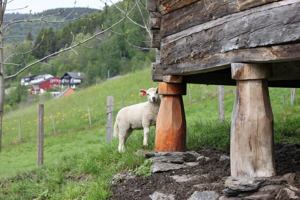 scandinavian-adventures-056.jpg
