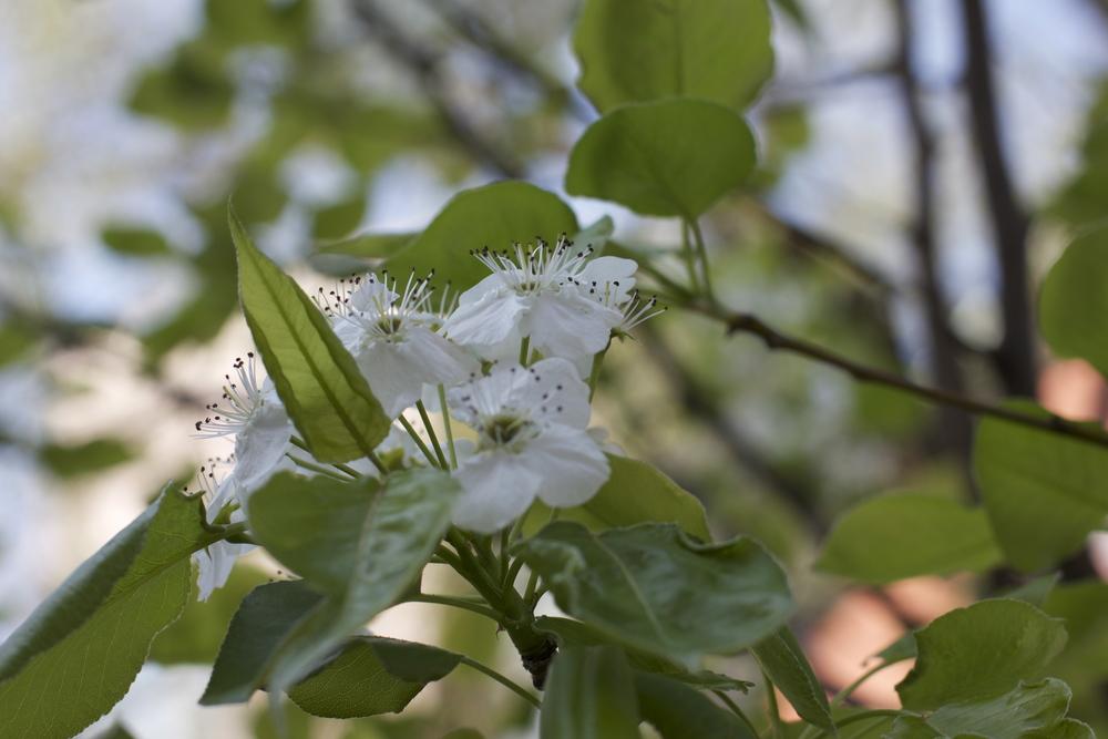 spring-2012-011.jpg