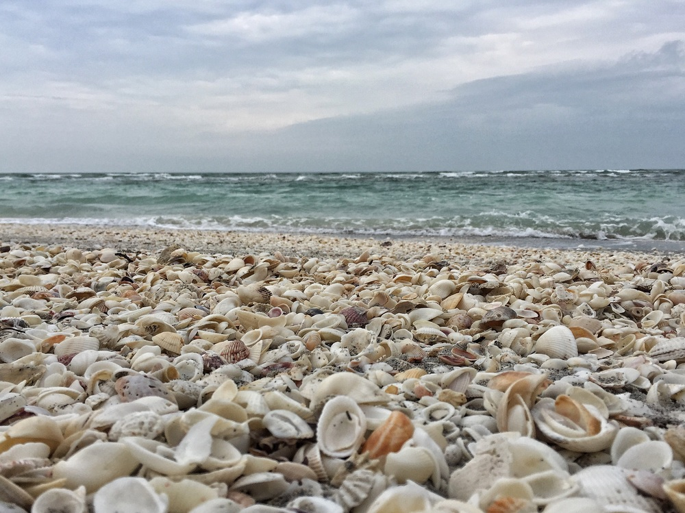 Sanibel shells.