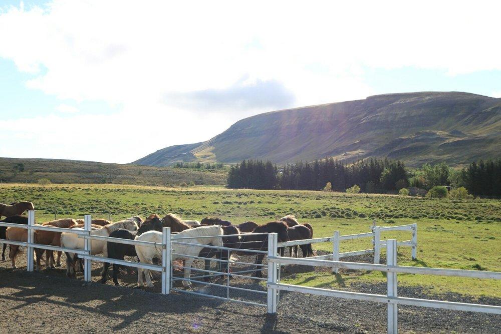 Laxnes Horse Farm.