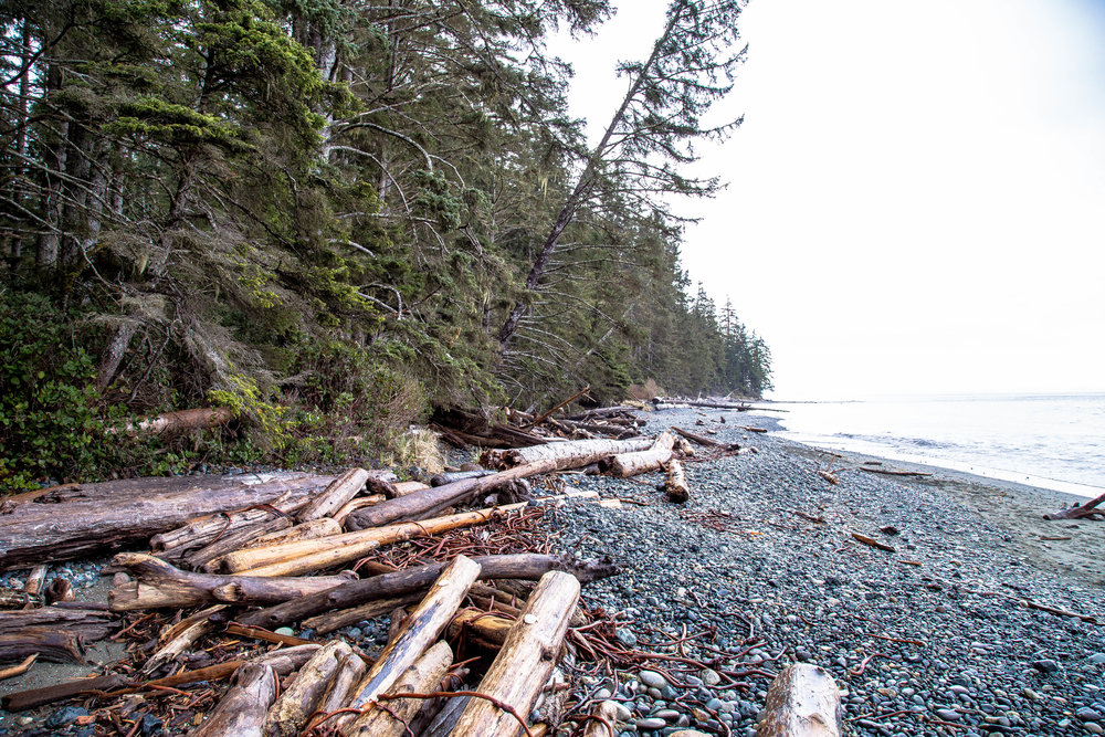 China Beach on the Juan De Fuca Trail.