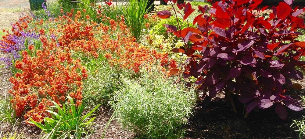 Organic gardening landscape maintenace Neskowin garden care