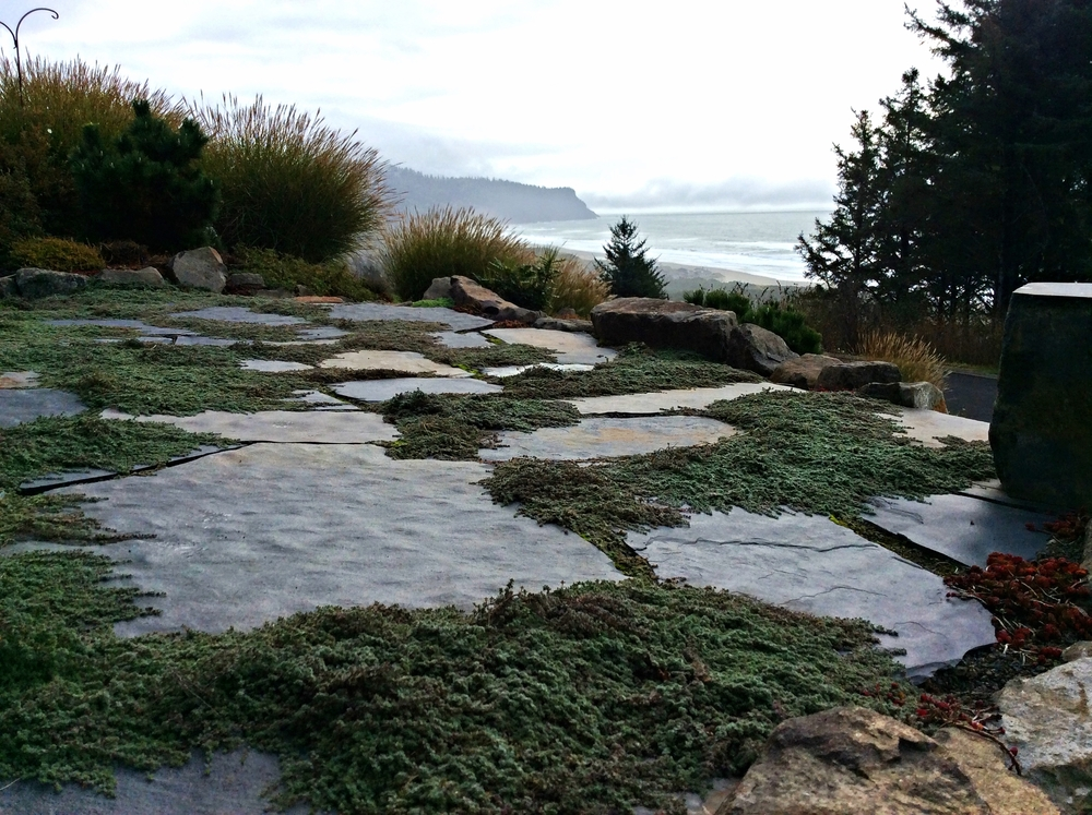 Iron Mountain Flagstone  with Woolly Thyme