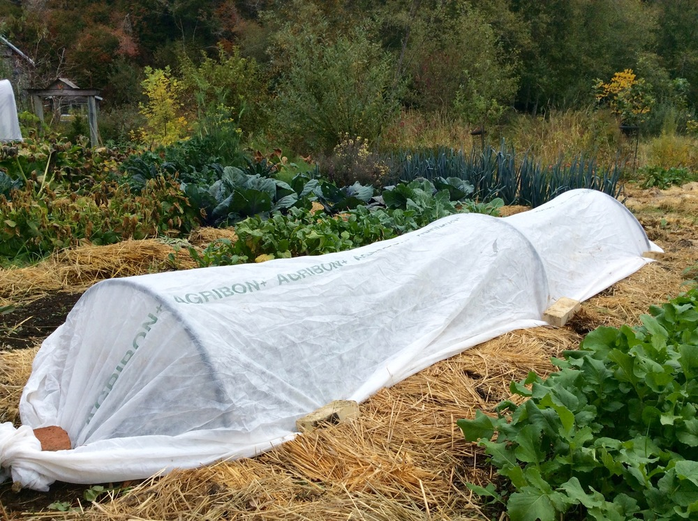 Agribon Spun-row covers from Peaceful Valley Farm Supply