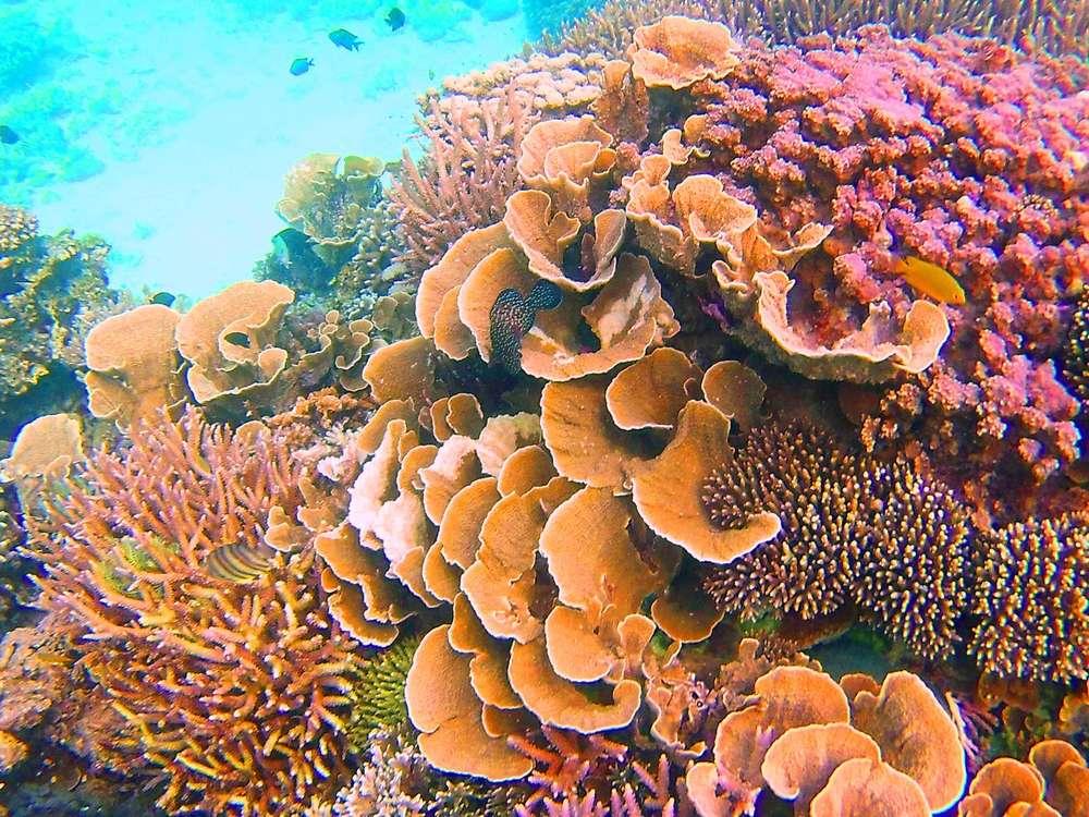 Jardins coraliens, El Nido