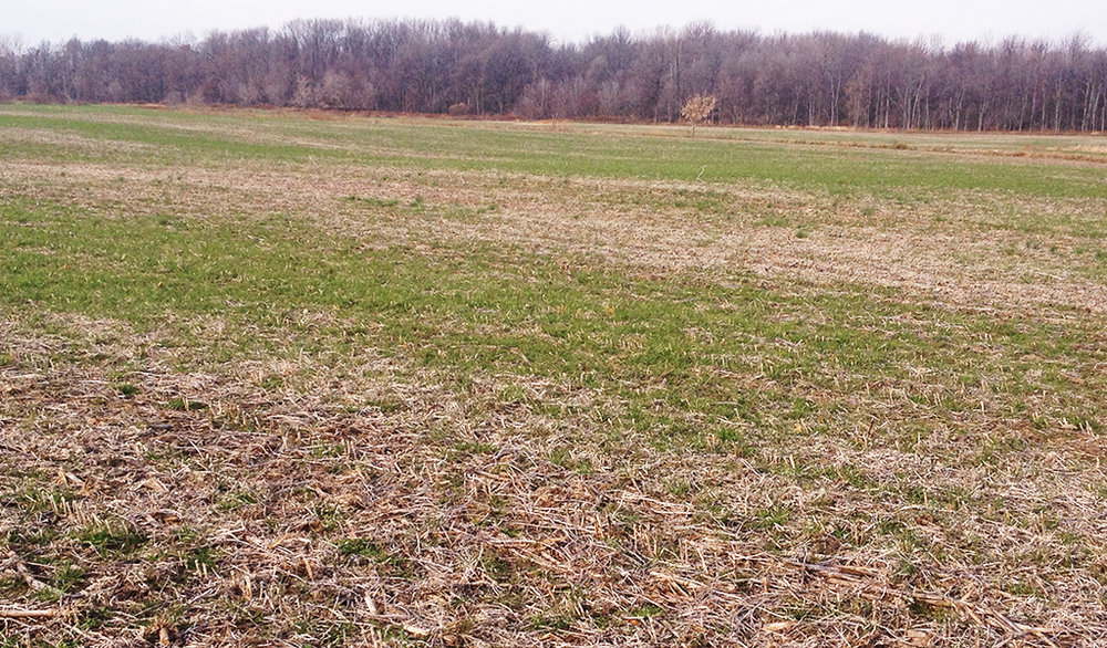 While aerial broadcasting is a time efficient application method, it's important that seed be flown on in a tight pattern. This photo shows strips where seed likely was not dropped at as high of a rate, or at all, as other areas of field, resulting in poorly distributes cover crops.