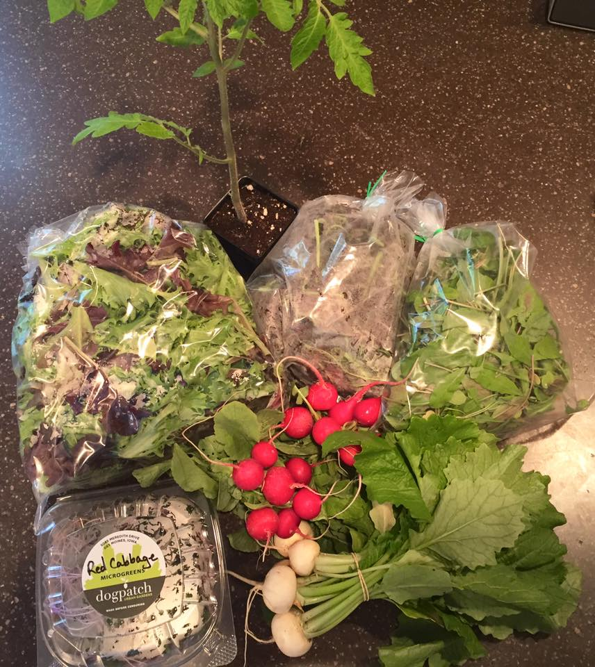 Week 2 of the Salad Subscription (photo taken by subscriber Alex B)