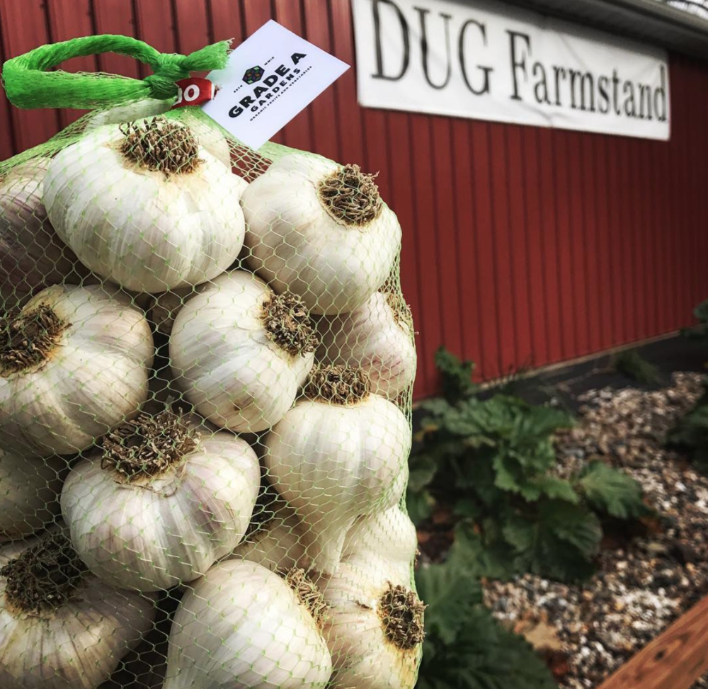 DUG FarmStand garlic sourced from local farm, Grade A Gardens