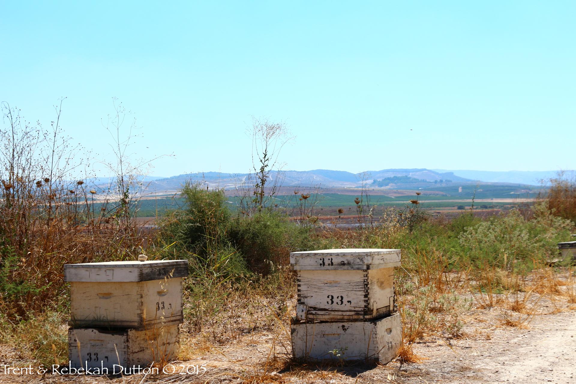 4_Sorek_Bees_2