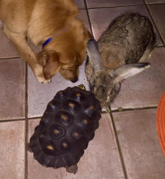 Bruno the Alpha Bunny