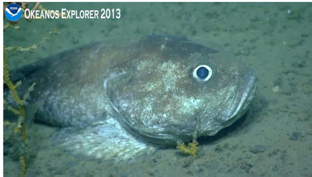 BuzzFeed Community Post (Sept. 9, 2013):  NOAA's Ocean Explorer: Revealing The Secrets Of The Sea Floor
