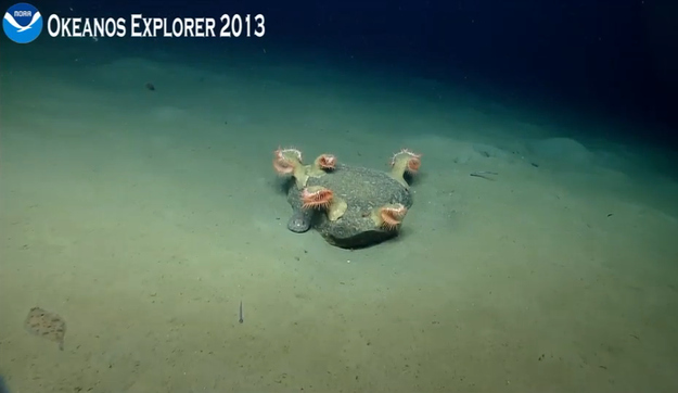 BuzzFeed Community Post (Sept. 9, 2013):  NOAA's Ocean Explorer: Revealing The Secrets Of The Sea Floor