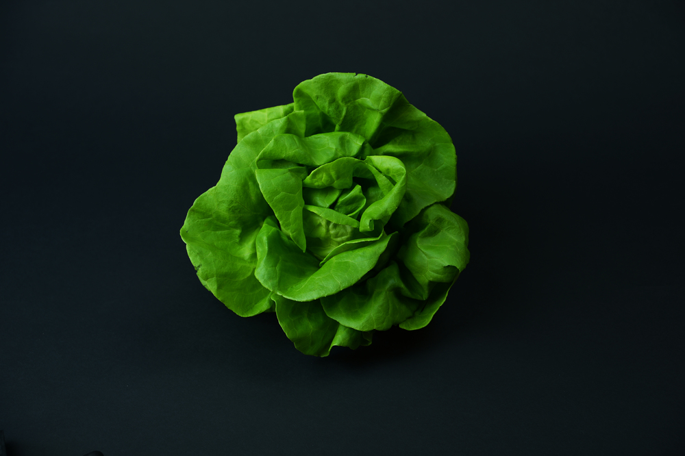 Suncrest™ Bibb Lettuce