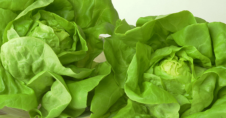 The art and science of growing lettuce, when done well, yields beautiful looking and wonderful tasting lettuce.