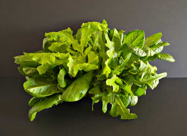 A tasty bouquet of Suncrest™ lettuces.