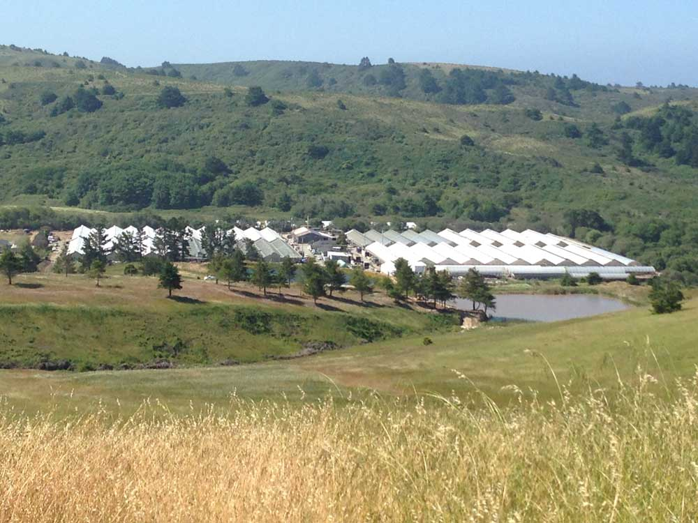 Pescadero Growers operates Suncrest's hydroponic growing systems in a 2.5 acre greenhouse Range – part of Oku Flower's ten acre greenhouse facility located in Pescadero, California.