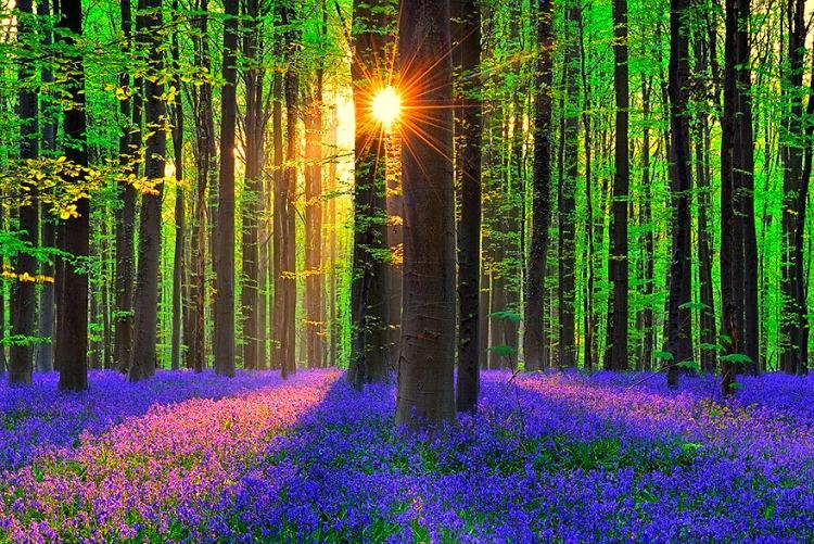 4. Hallerbos Forest, Halle, Belgium