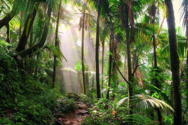 5.  El Yunque National Forest, Puerto Rico