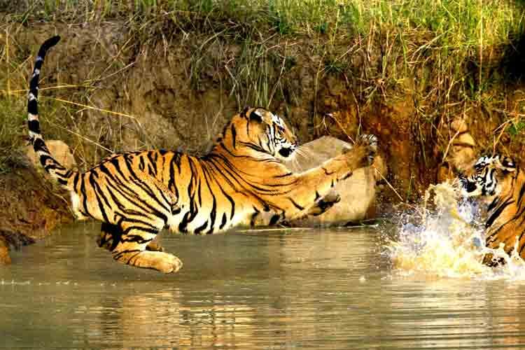 3. Bandhavgarh National Park – India