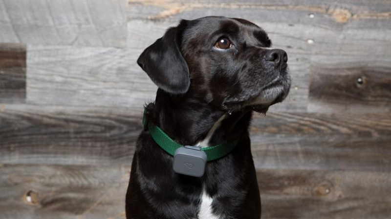 Whistle 3 GPS Pet Tracker