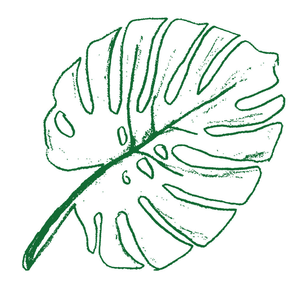 AEP_Monstera_Evergreen.jpg