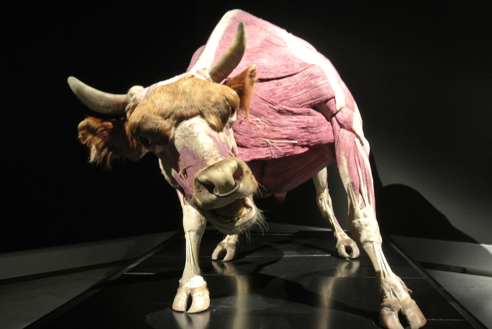 BodyWorlds Animals Inside Out